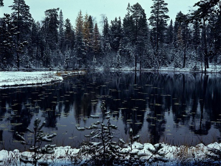 Пинежский заповедник вид зимой фото