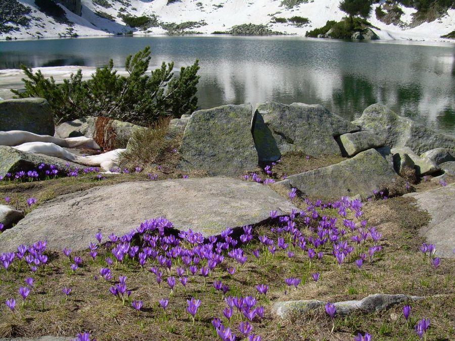 Национальный парк Пирин фотография