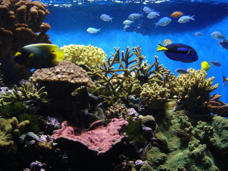 Фото подводных красот Плайа Эсмеральда на Кубе