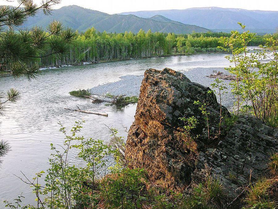 Берега реки Катунь фото Алтая