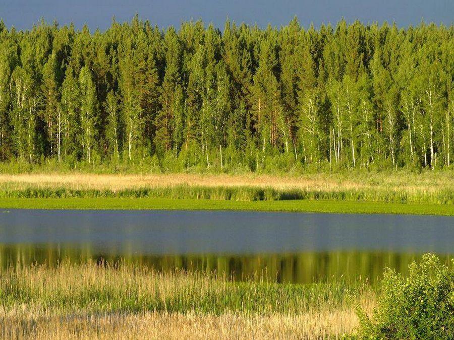 Красивая панорама реки Ик в Курганской области фотография