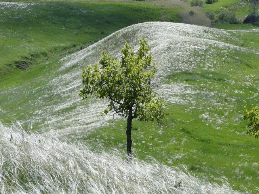 Фото красивых полей Самарской области