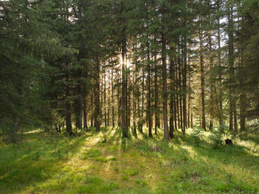 Фото лесов Самарской области