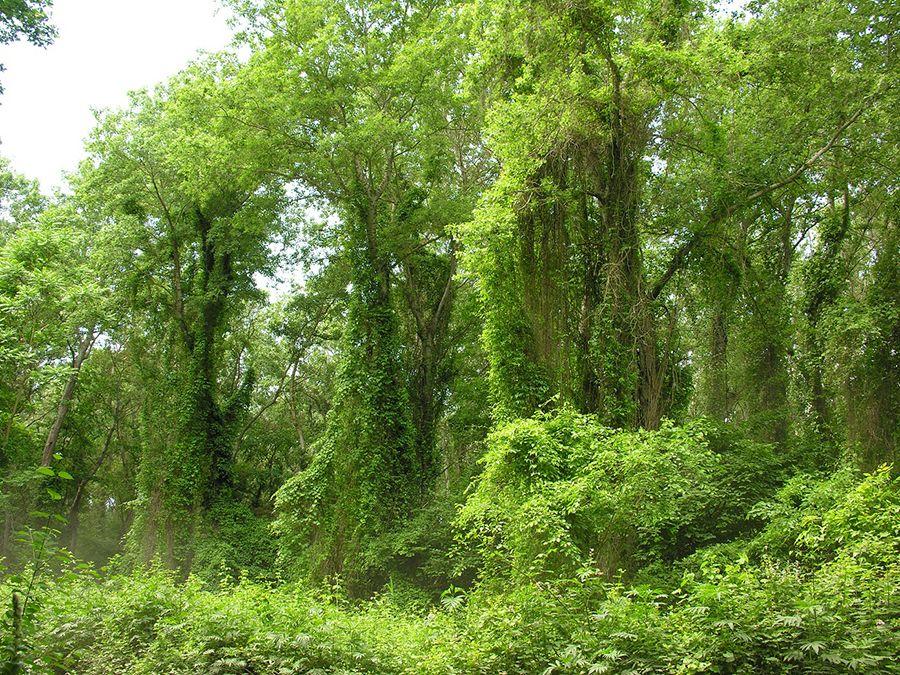 Фотография Самурского леса