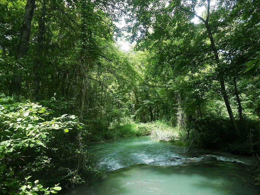 Самурский лес фото Дагестана