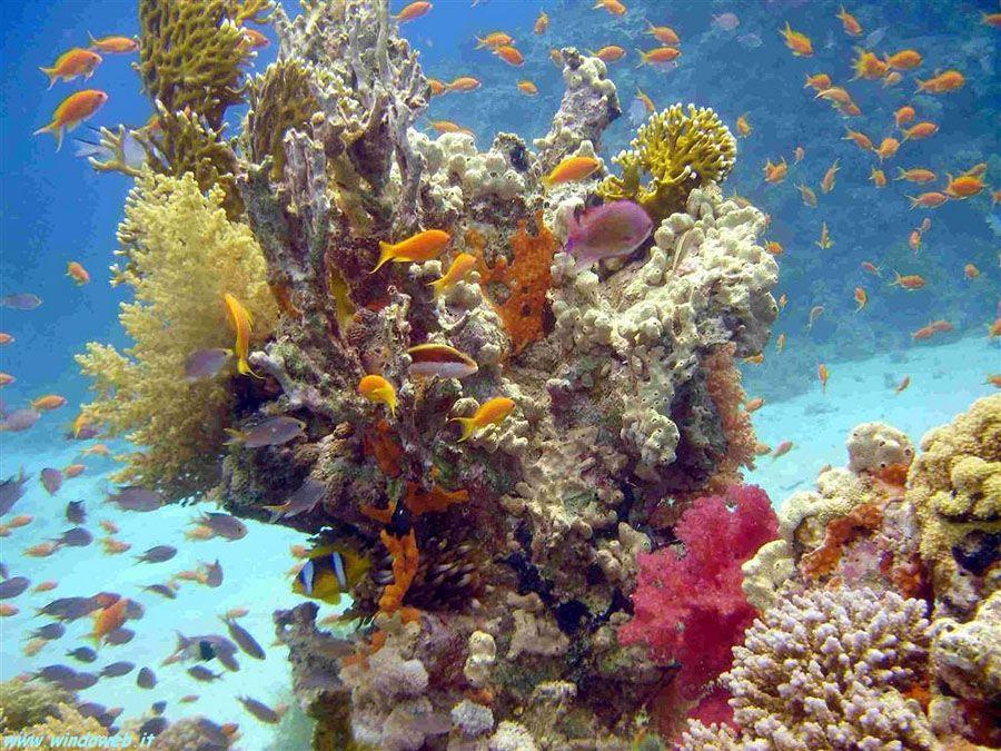Подводный мир Шарм-эль-Шейха фото