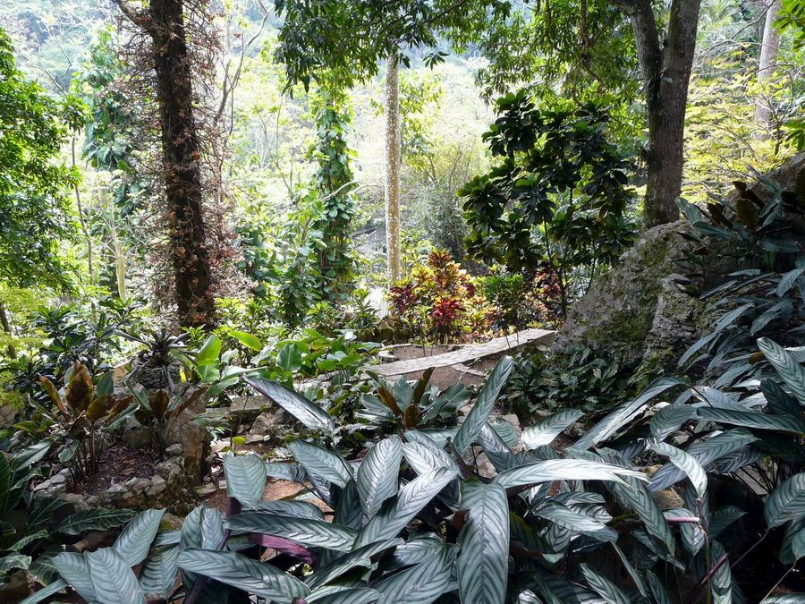 Фото Парка орхидей в Сороа на Кубе