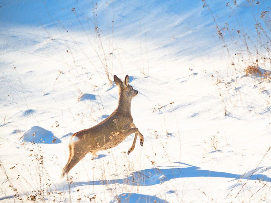 Участок Ямская степь зимой в Белогорье фото