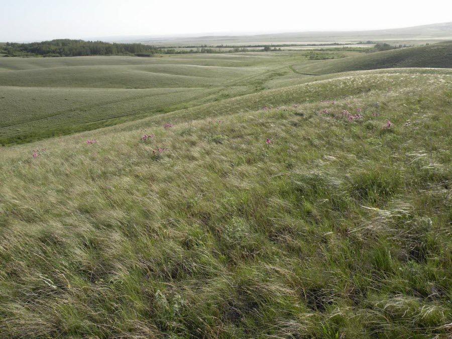 Фото пейзаж Таловской степи