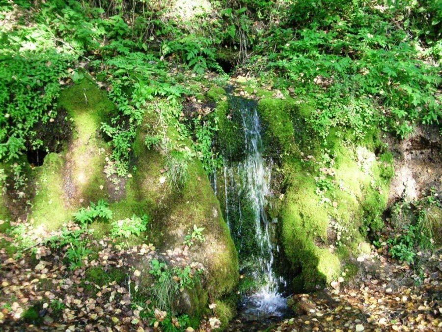 Фото природы окружающей Таловские чаши