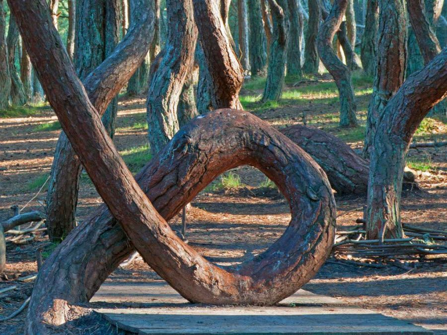 Удивительные деревья Танцующего леса фото