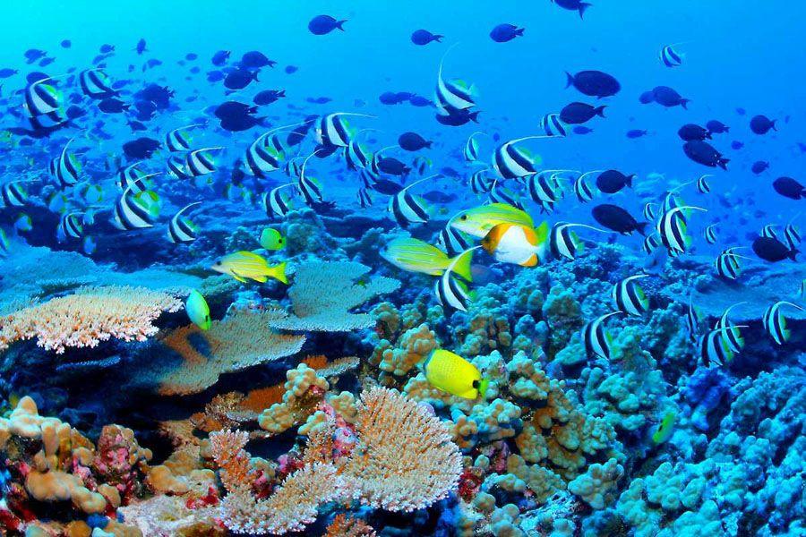 Красота Большого Барьерного рифа подводой фото