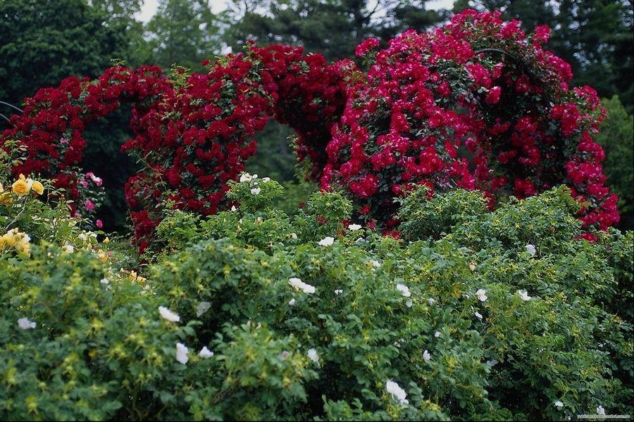 Долина роз в Болгарии фотография