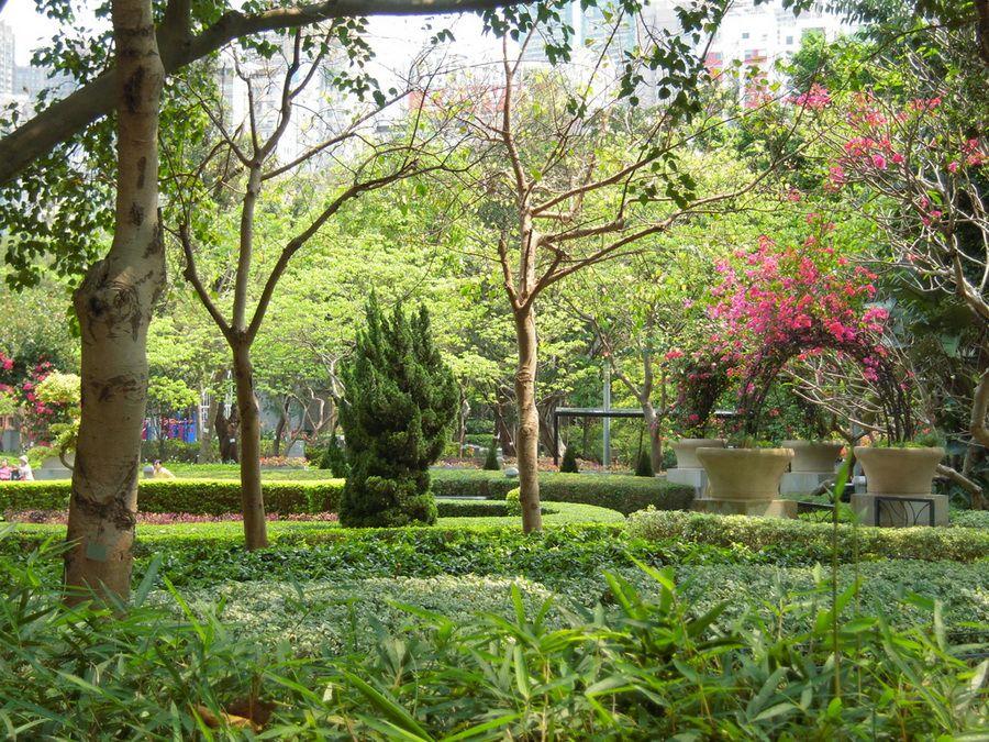 Фото живописной лужайки и цветущих кустов парка Виктории в Гонконге