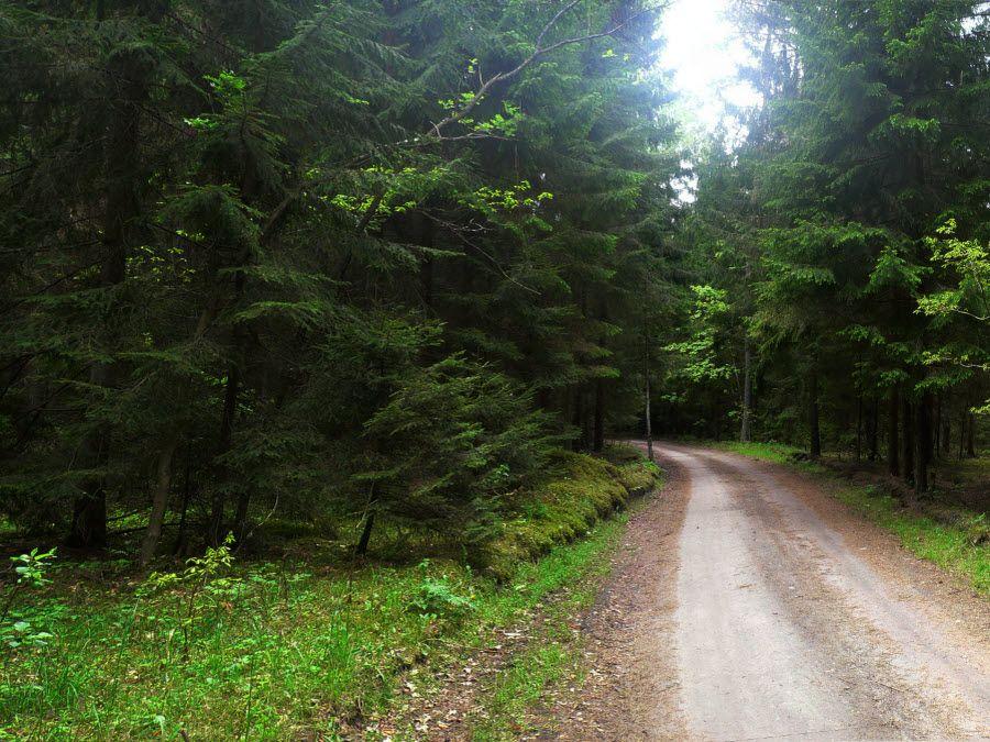 Фото красивого леса окружающего Виштынецкое озеро