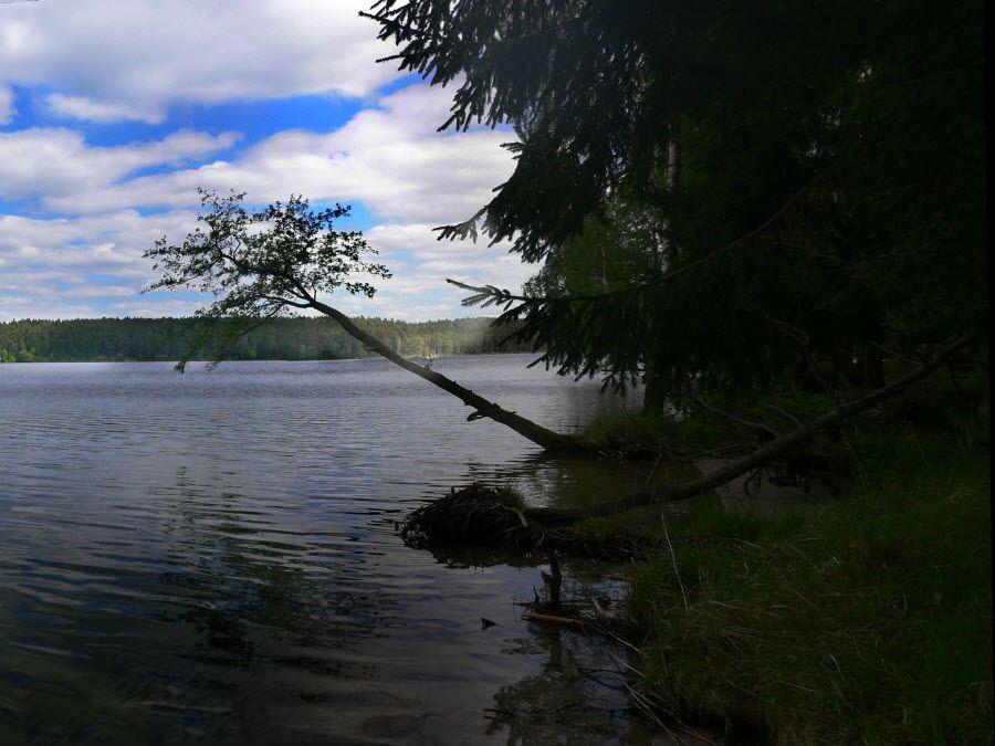 Виштынецкое озеро или Виштитис фото