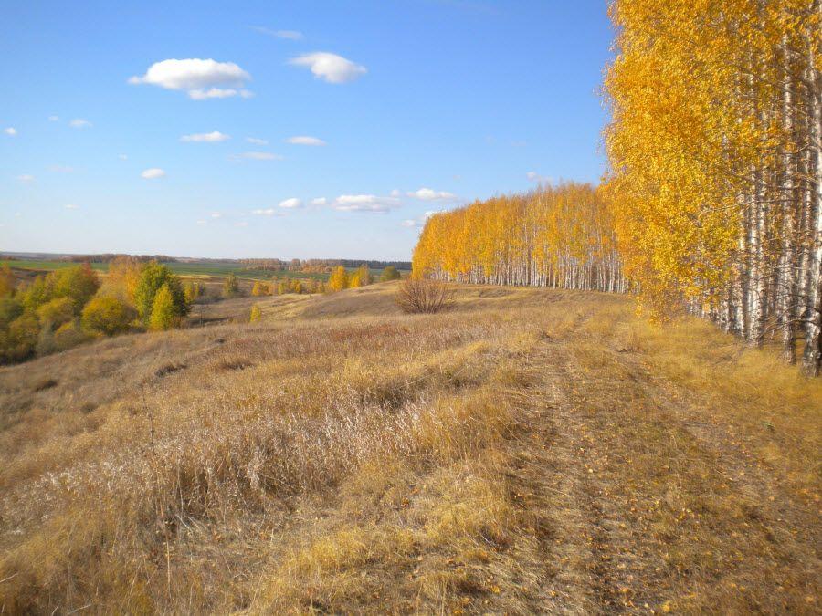 Панорама Воронинского заповедника осенью фото
