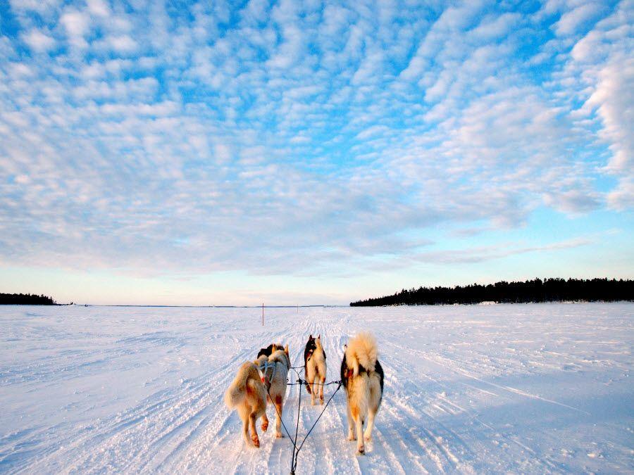 Один из способов передвижения в горах Лапландии фотография