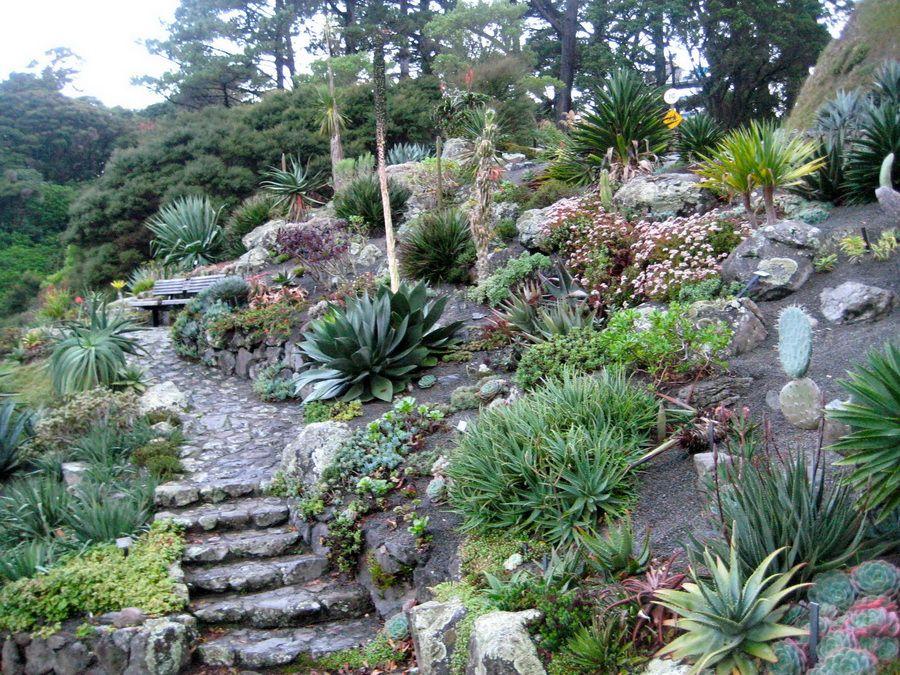 Фото Ботанического сада в Веллингтоне
