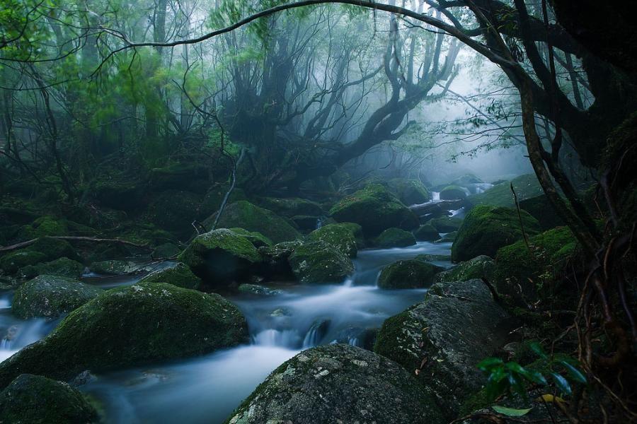 Фото лесного пейзажа на острове Якушима