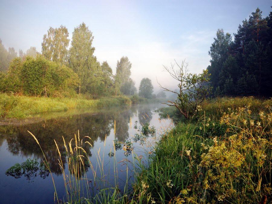 Фото красивая природа Ярославской области