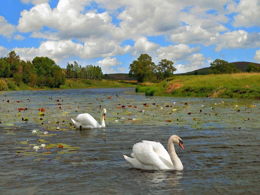 Фотография лебедей в Южно-Уральском заповеднике в Башкирии