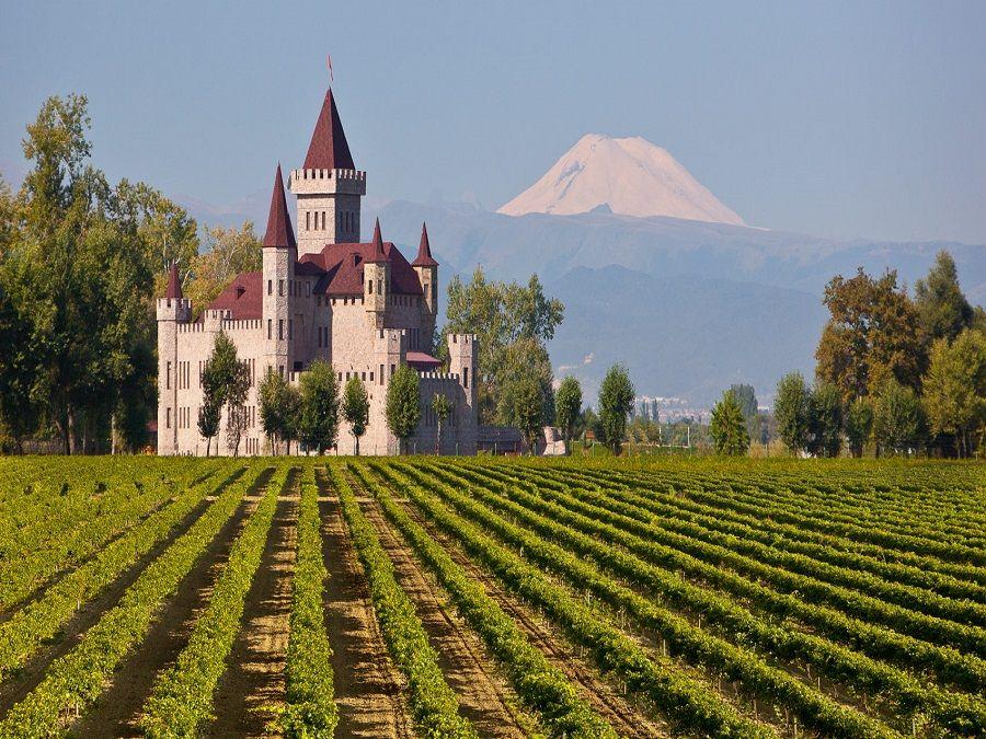 Фотография виноградника замка Шато Эркен