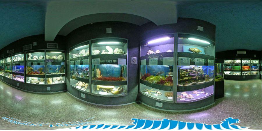 Севастопольский морской Аквариум-музей фото