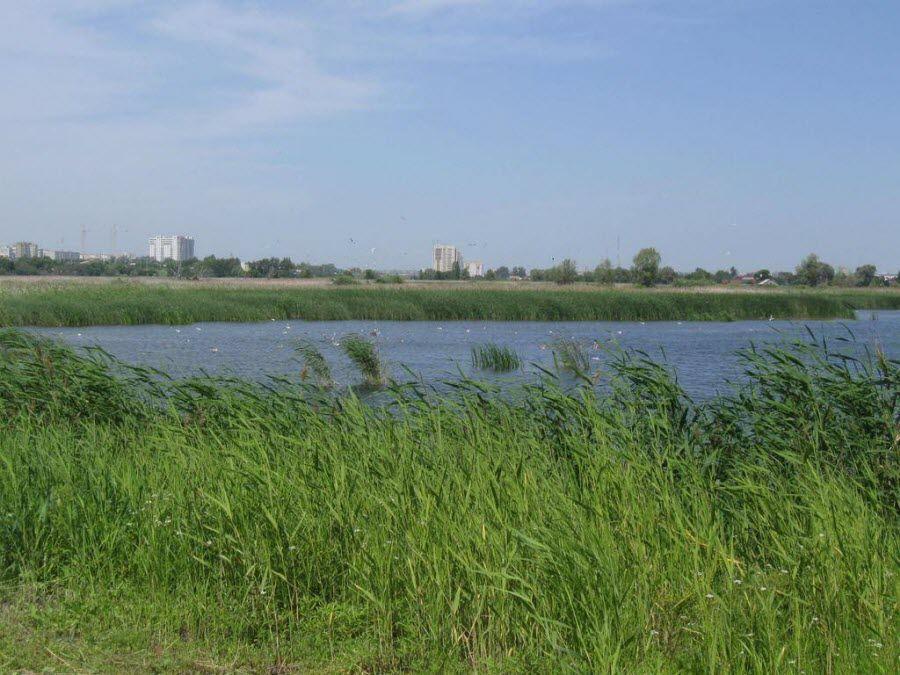 Заповедник «Птичья гавань» в Омске фото