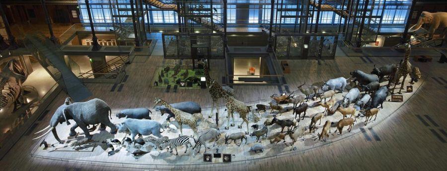 Большая галерея эволюции фото