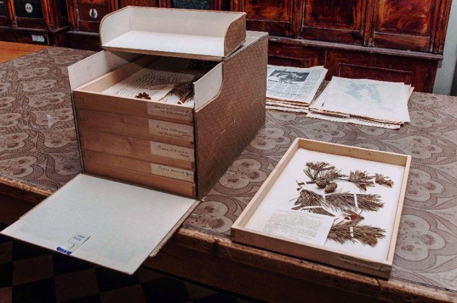 Ботанический музей Казанского государственного университета фото