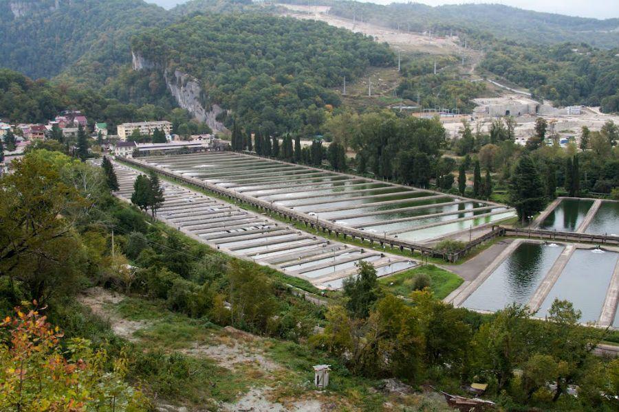Фотография Форелевое хозяйство в Адлере