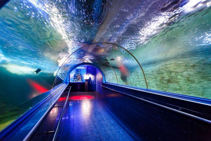 Краснодарский океанариум фото