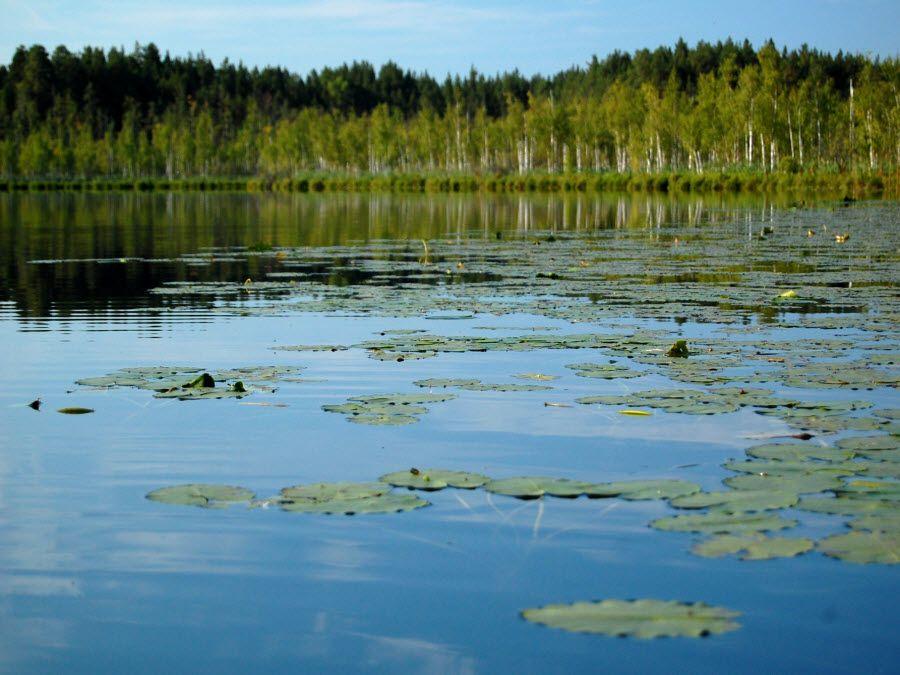Озеро Кирек в Томской области фото