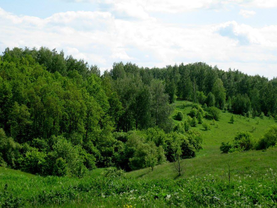 Красивые леса Липецкой области фото
