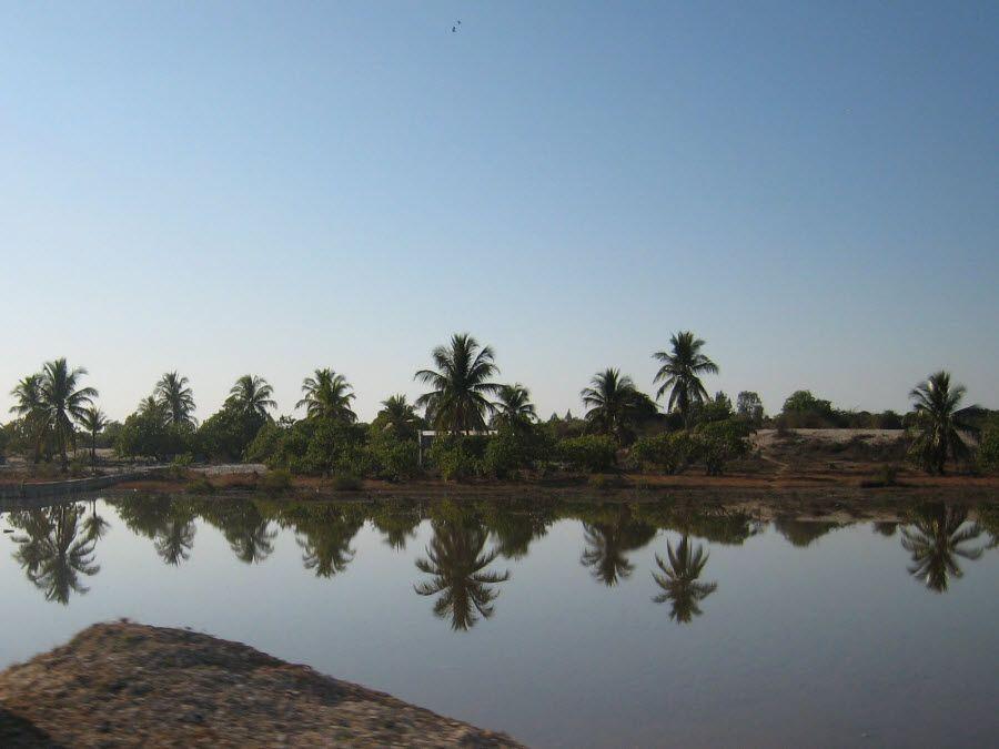 Фото оазиса из пальм в городе Махадзанга на Мадагаскаре