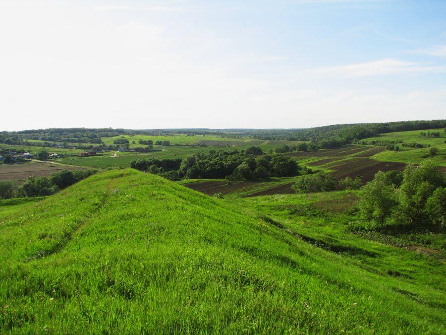 Зеленые луга Московской области фото