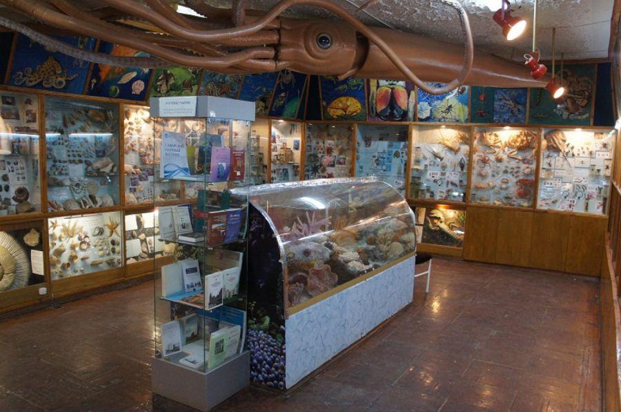 Зоологический музей имени Д. Н. Фролова фото