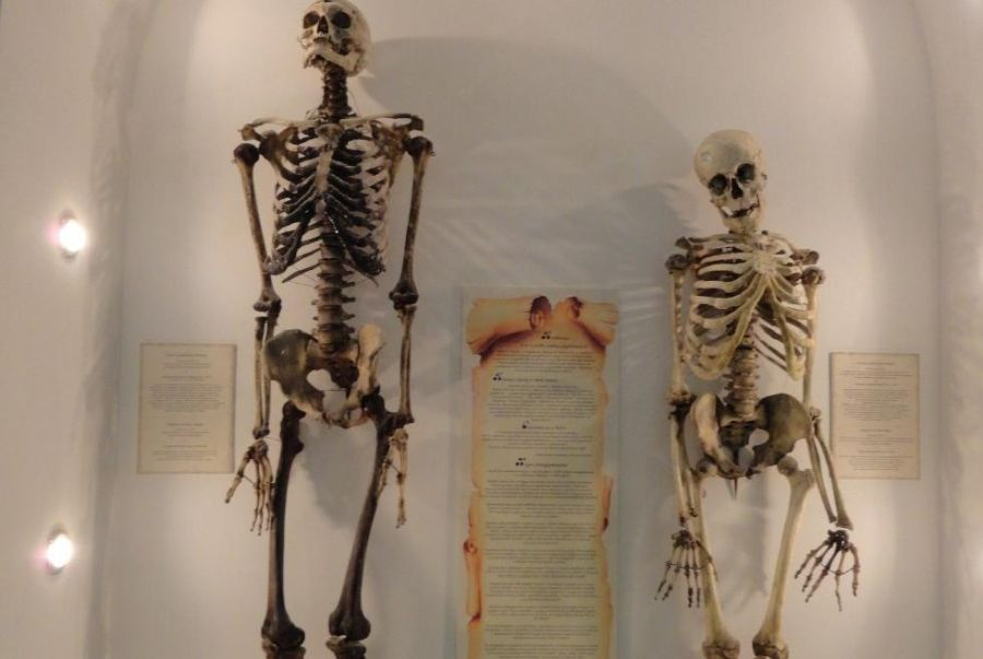 Музей кафедра нормальной анатомии Казанского государственного медицинского университета фото