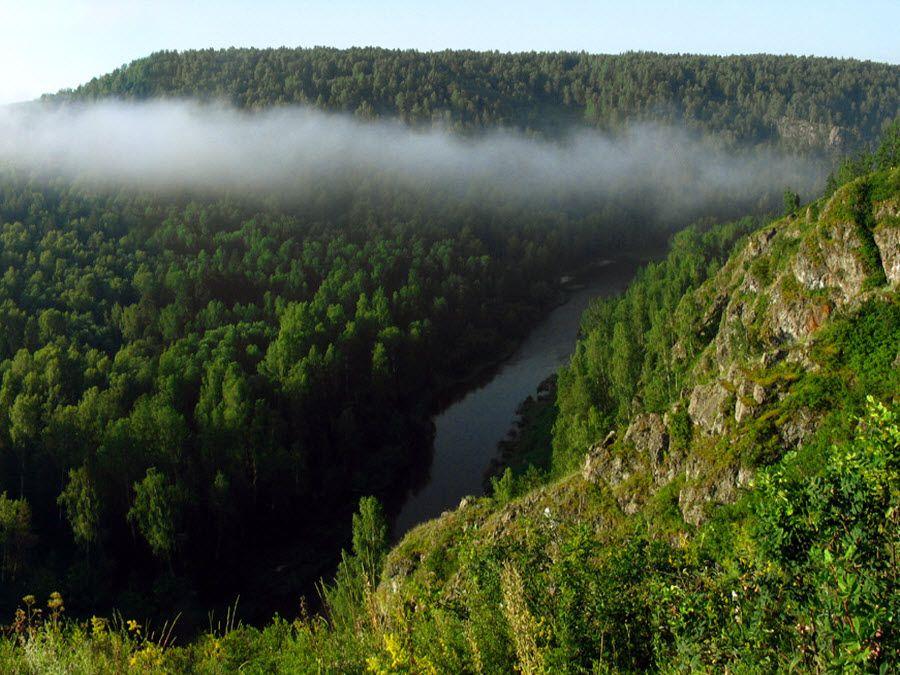 Фото удивительных лесов Новосибирской области