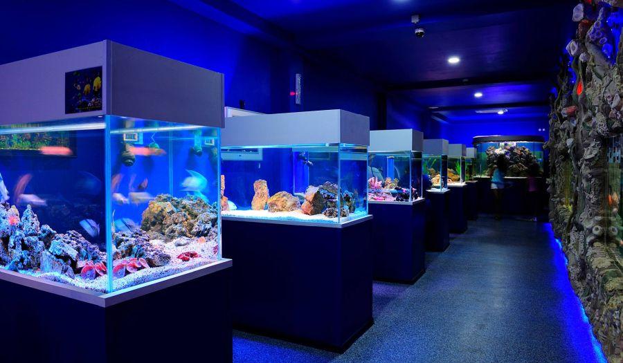 Океанариум и экзотариум фото