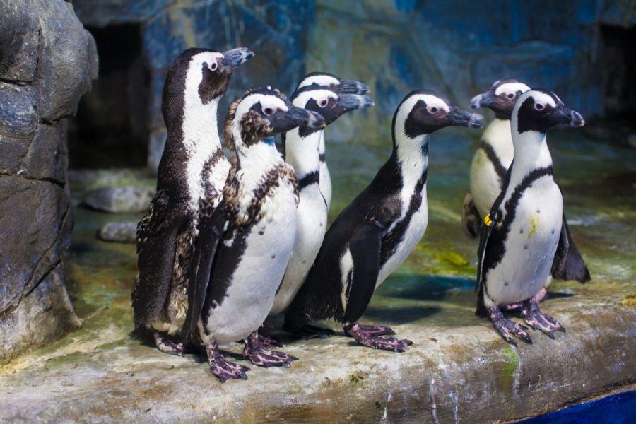 Пингвинариум фото