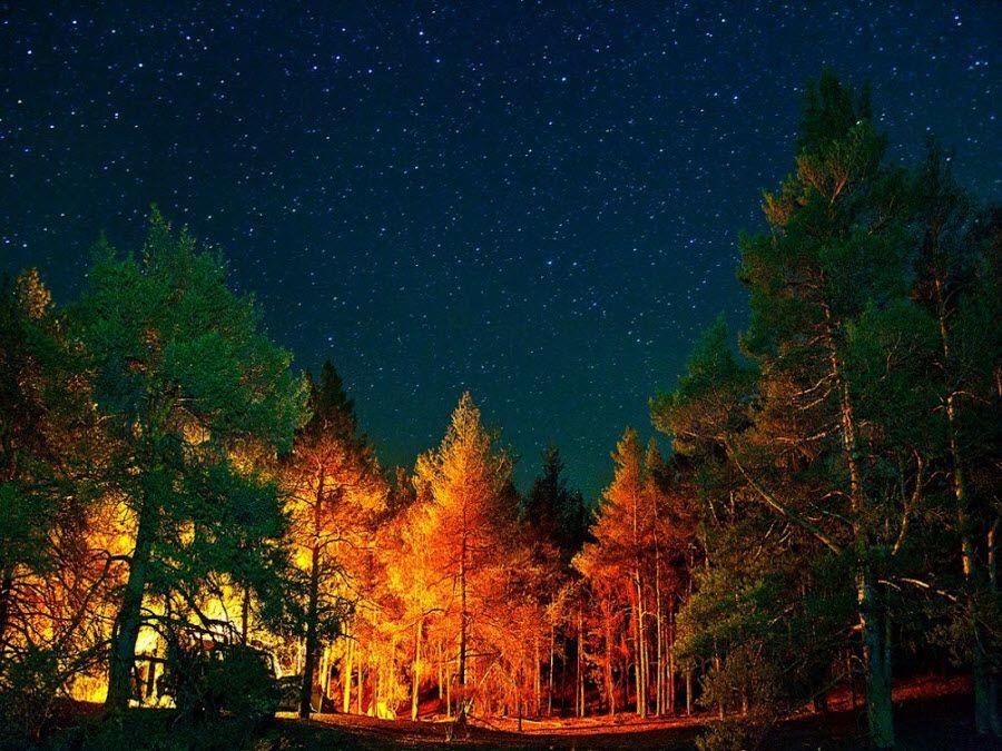 Невероятный лес Ростовской области фото