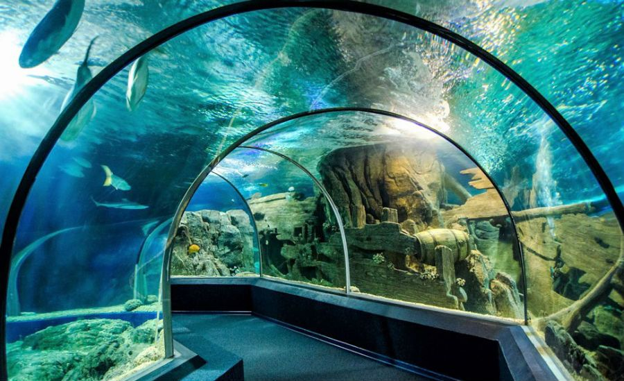 Сочинский океанариум фото