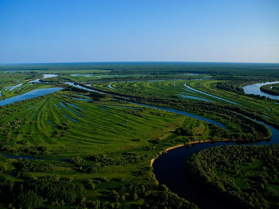 Вид сверху на тайгу Томской области фото