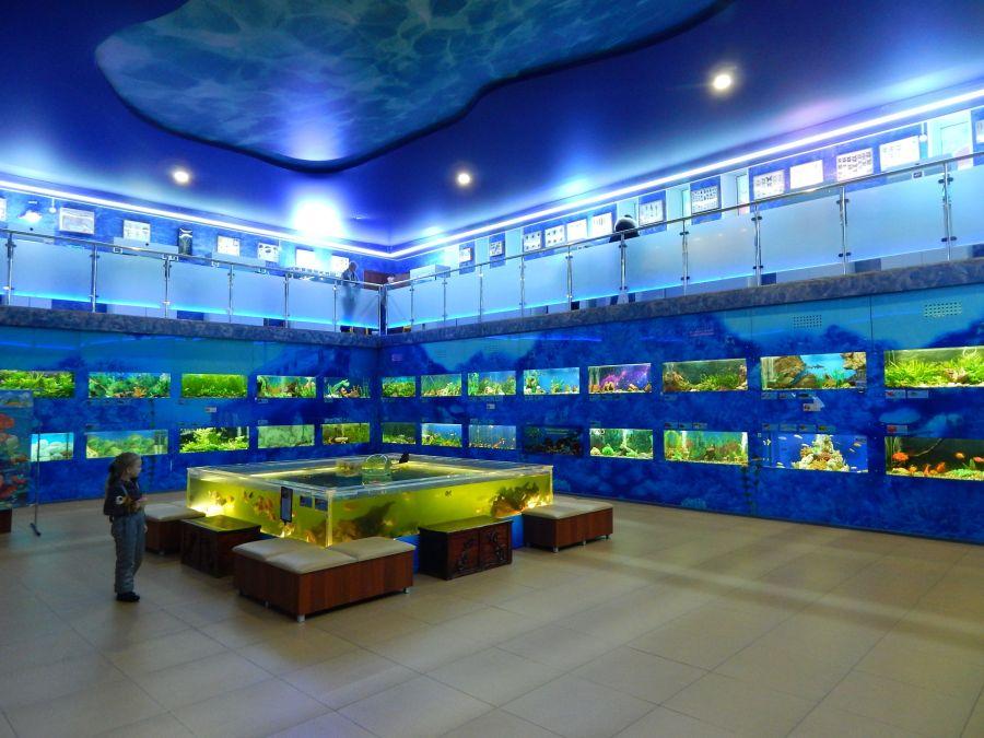 Выставочный зал «Аквариум» фото