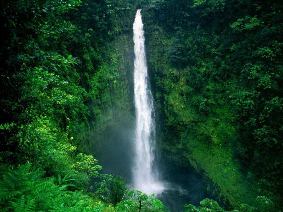 Фото потрясающего пейзажа с водопадом в лесах Туниса