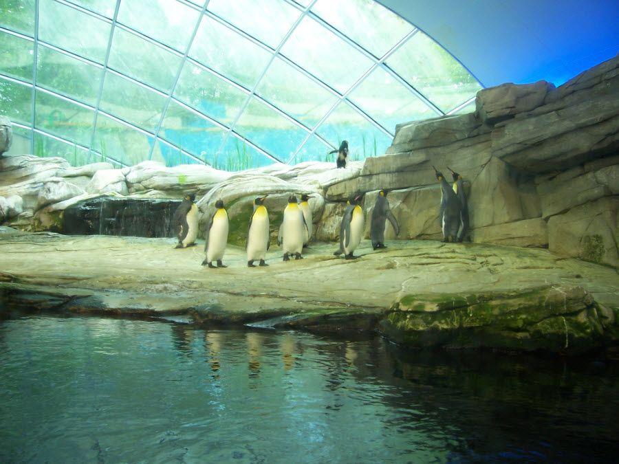 Фото ростовский зоопарк внутри