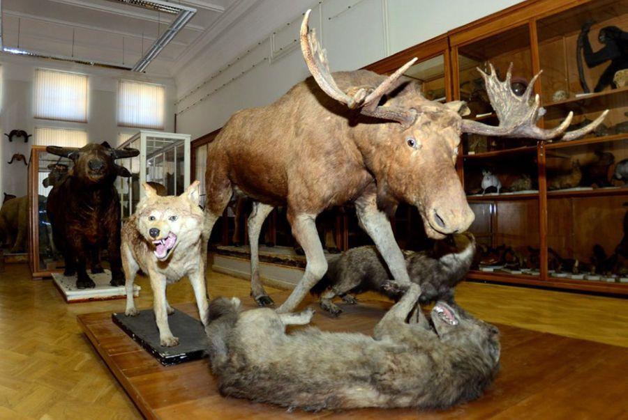 Фотография Зоологический музей им. Э. А. Эверсманна Казанского университета
