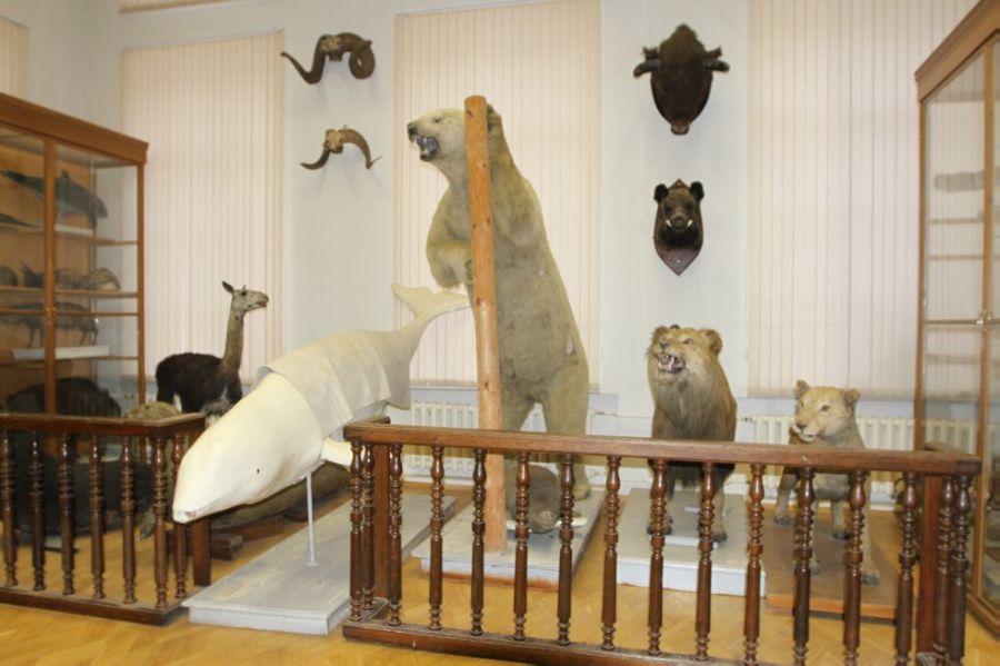 Зоологический музей им. Э. А. Эверсманна Казанского университета фото